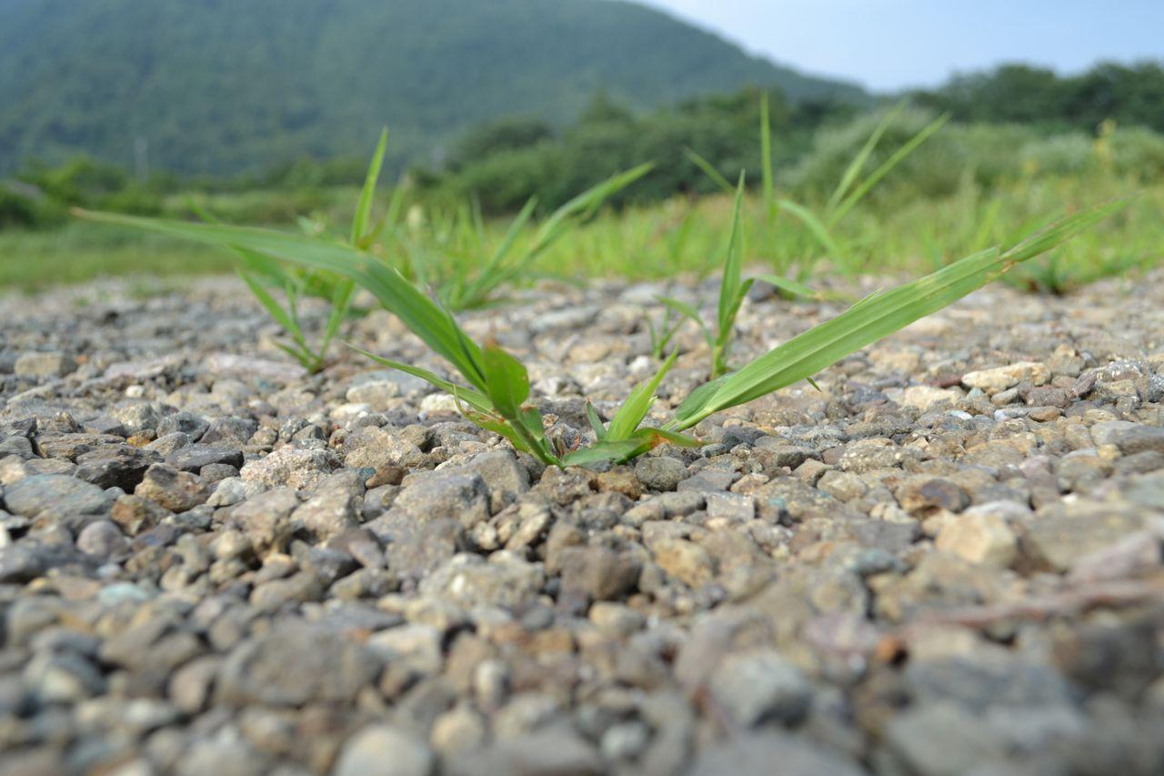 lake_kawaguchi_lake_saiko_mount_fuji_funkloch_abschalten_japan_fujiyoshida1