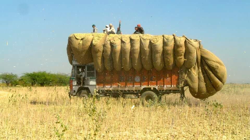Aus den Ernteresten der Senfernte kann nachhaltig Strom aus Biomasse produziert werden.
