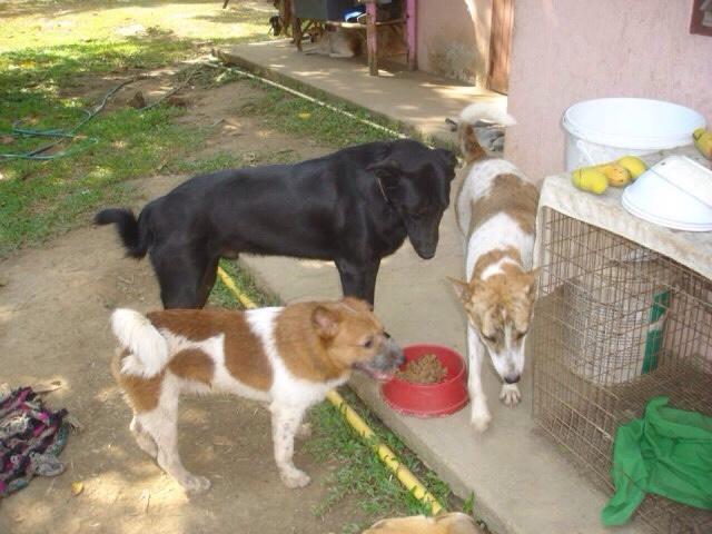 ChiangMai_Straßenhund_statt_Tem,pel