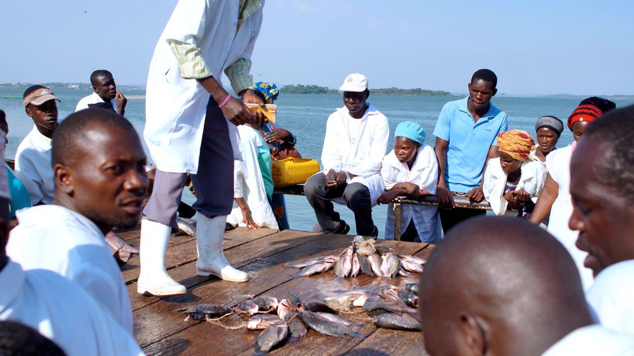 Fischmarkt am Gaba Market in Kampala, Uganda