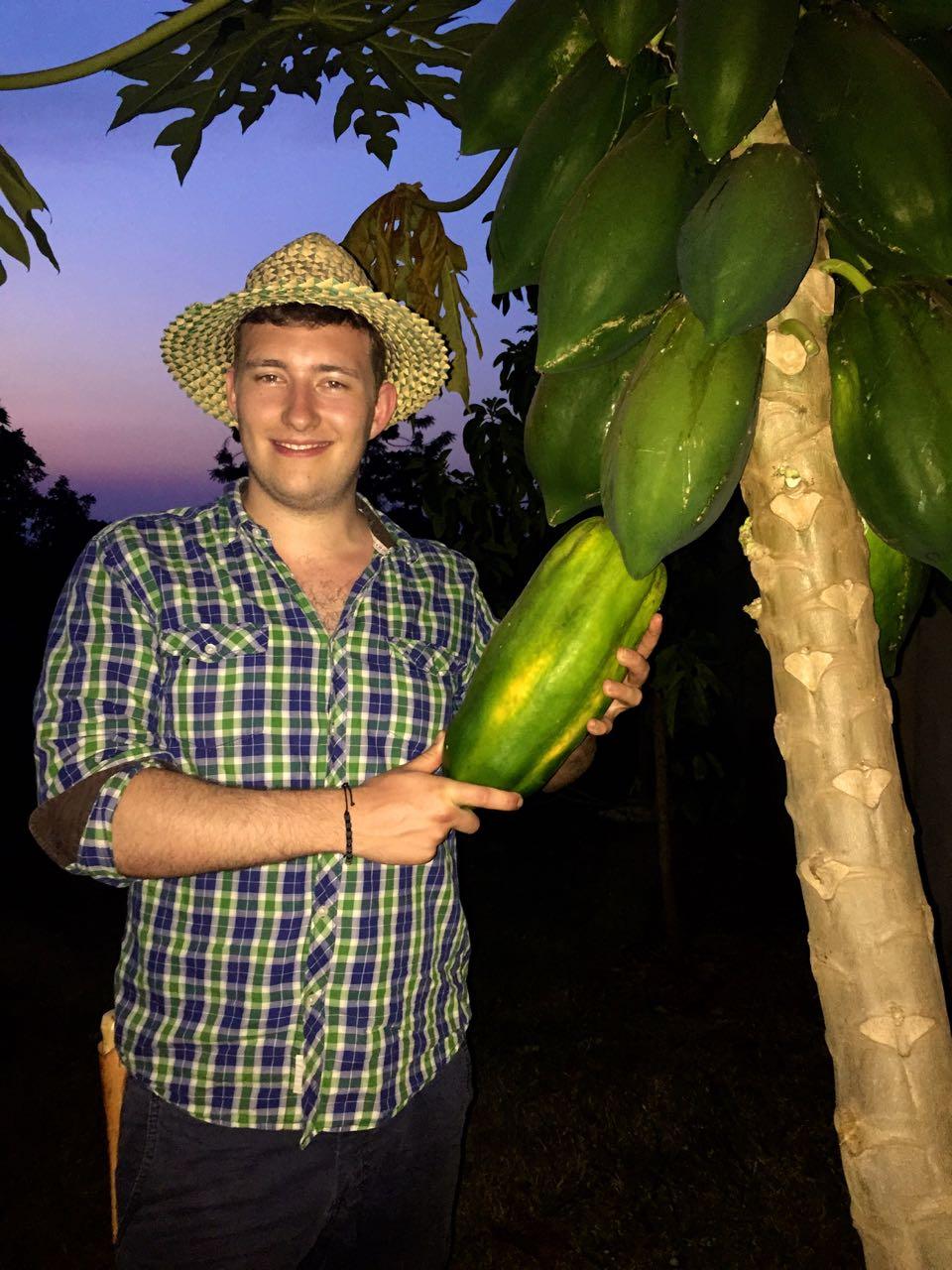 Papaya-Uganda