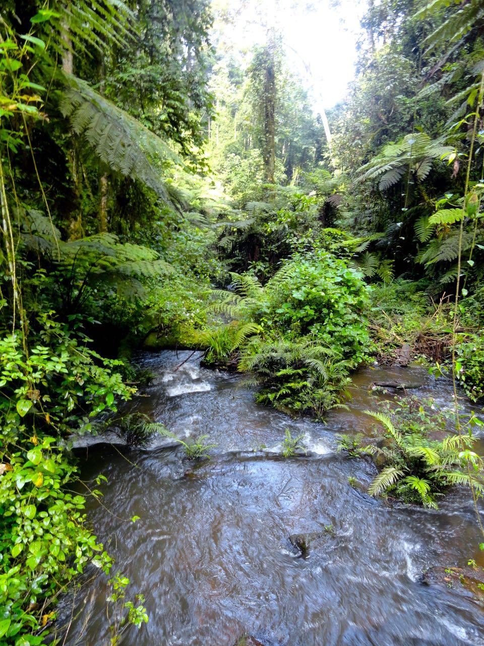gorilla_trekking_bwindi_nationalpark_uganda_gorillas02