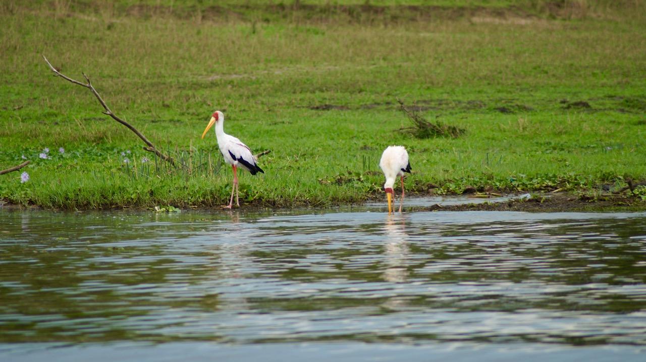 Wassertiere-Voegel-Uganda