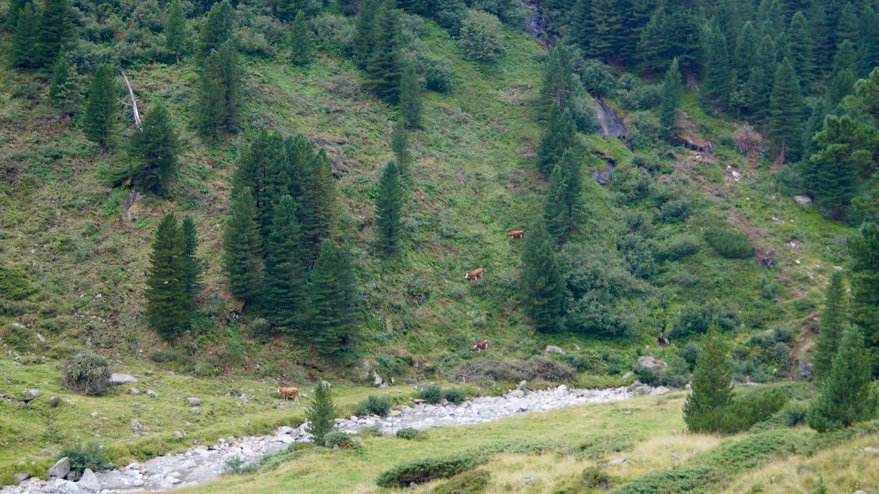 Alm-Volunteering-Tirol - 28