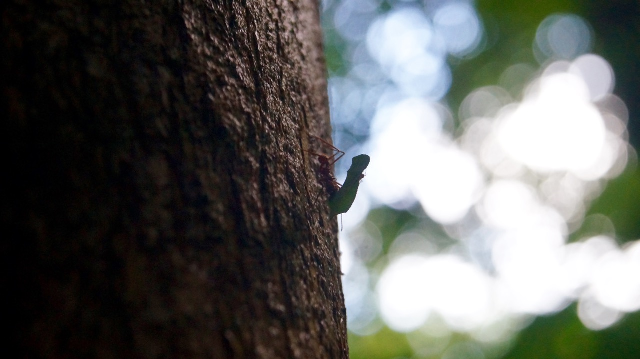 Costa-Rica-Regenwald - 1