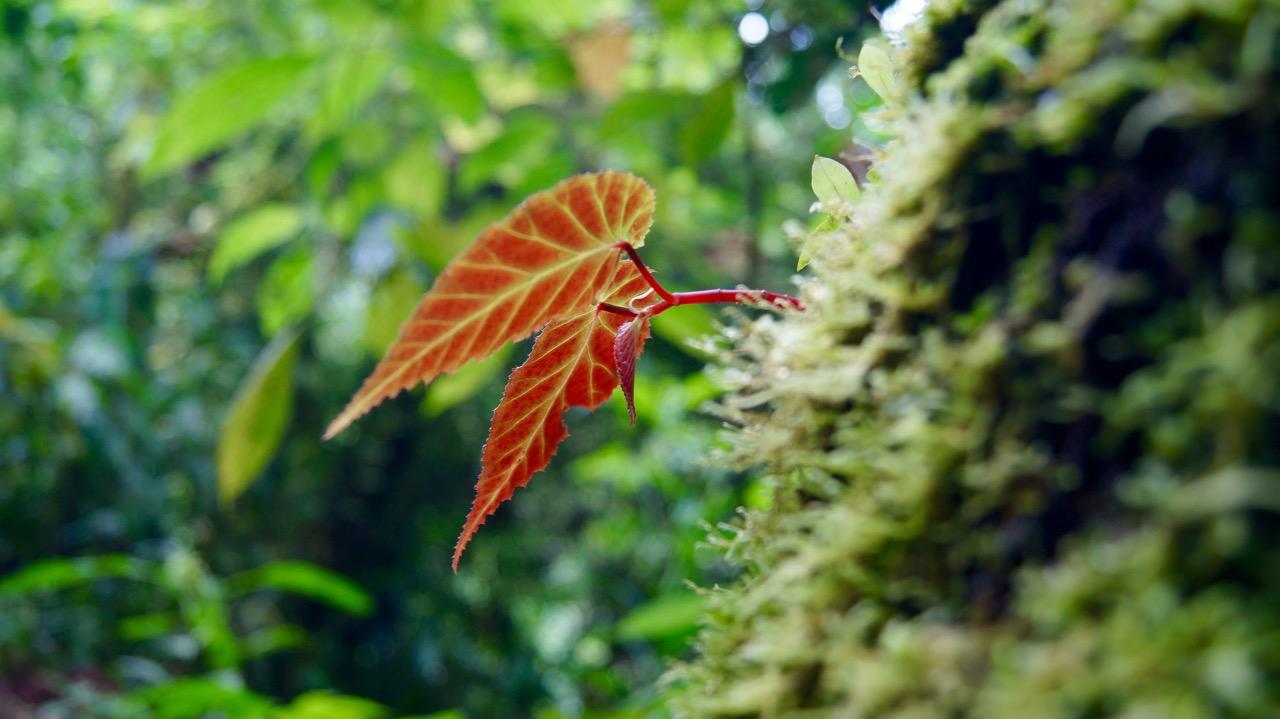 Costa-Rica-Regenwald - 12