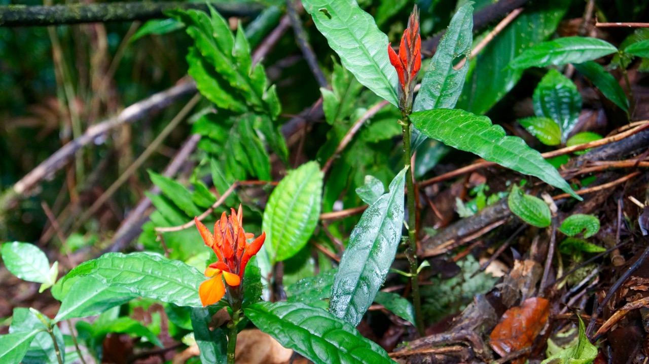 Costa-Rica-Regenwald - 14