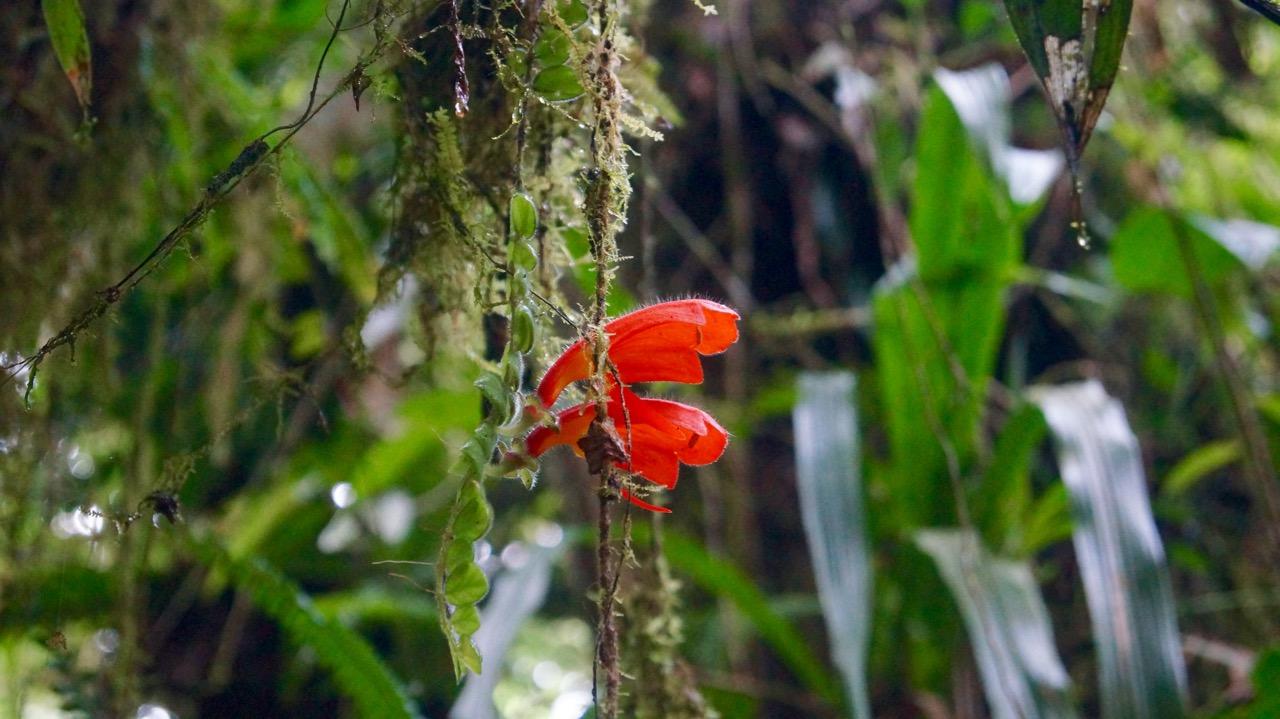 Costa-Rica-Regenwald - 15