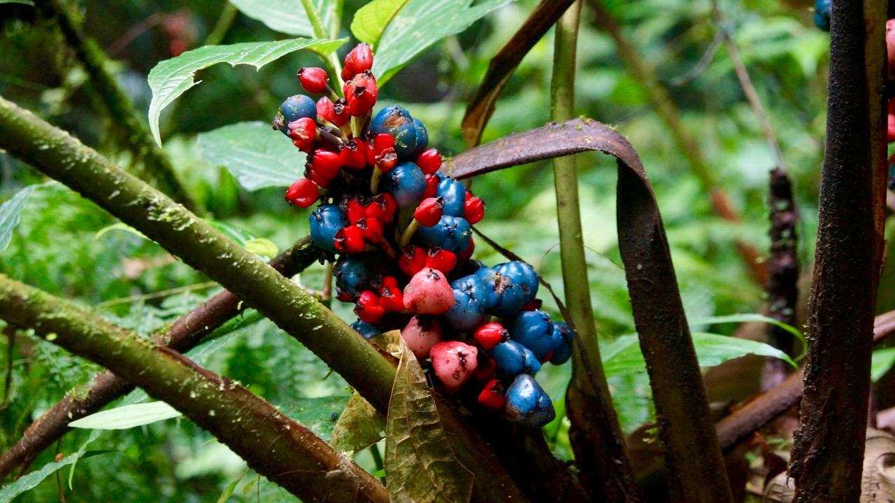 Costa-Rica-Regenwald - 16