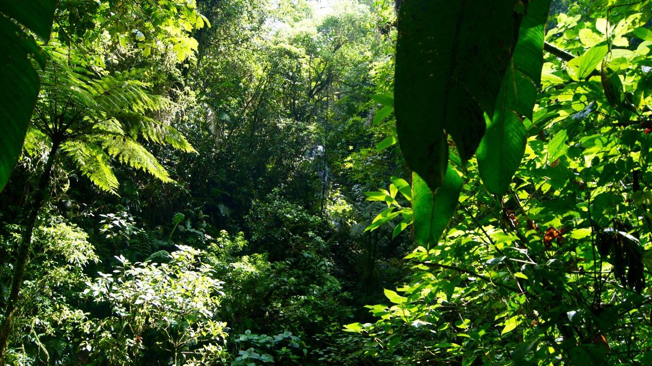 Costa-Rica-Regenwald - 17