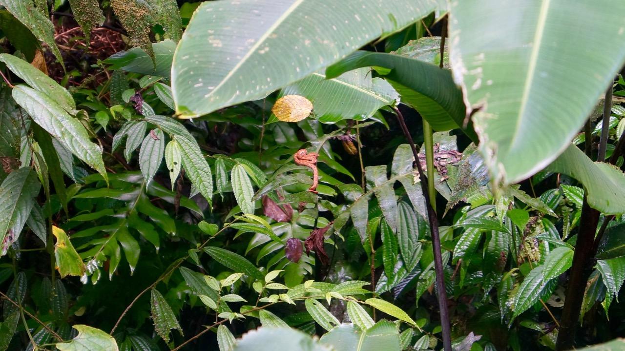 Costa-Rica-Regenwald - 19