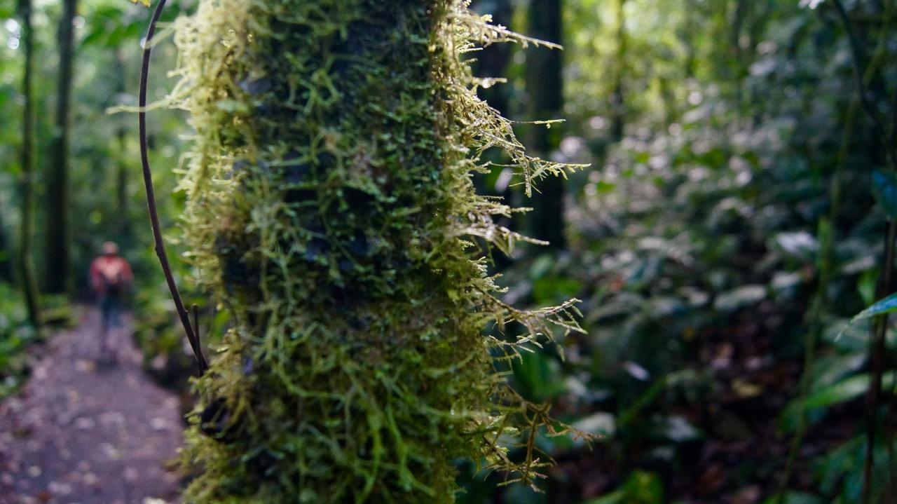 Costa-Rica-Regenwald - 2
