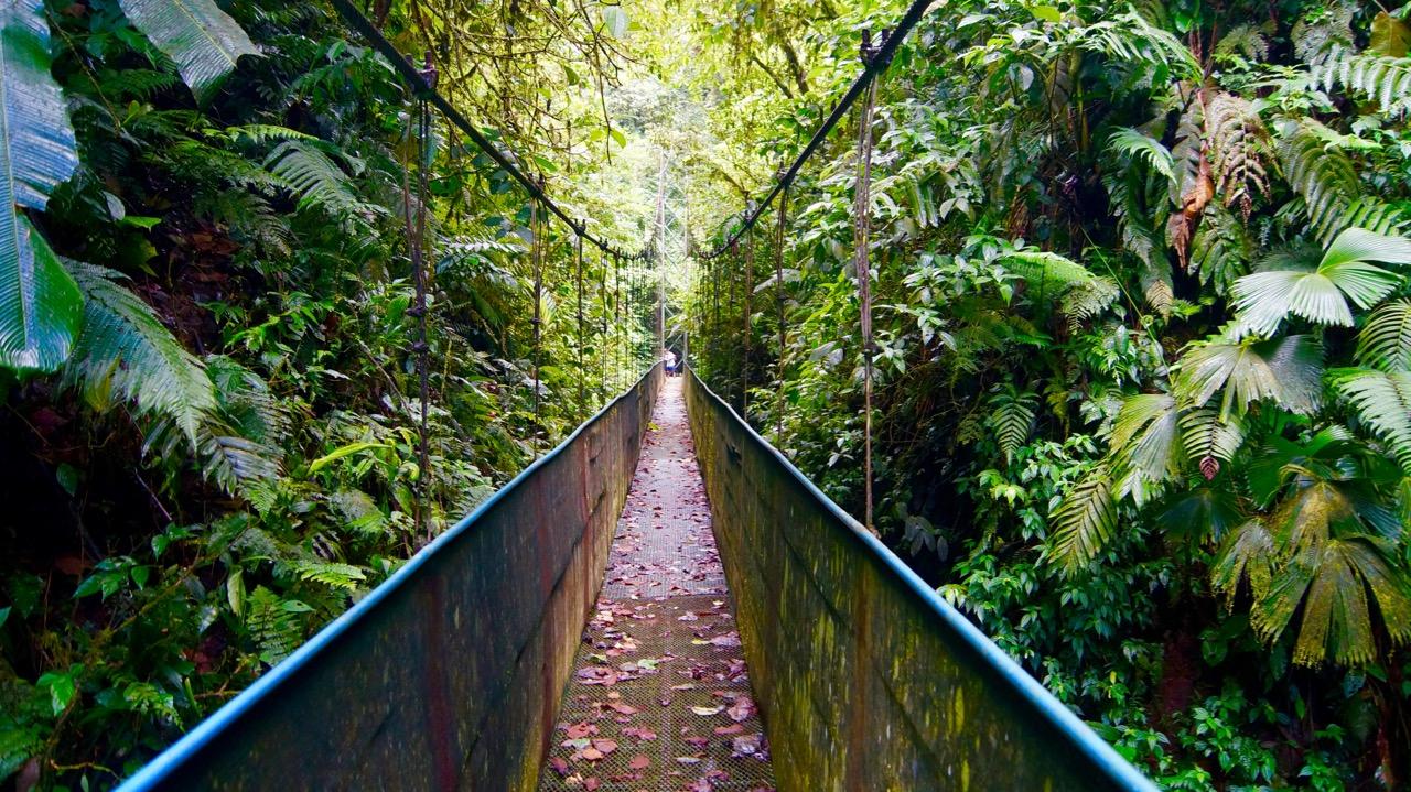 Costa-Rica-Regenwald - 20