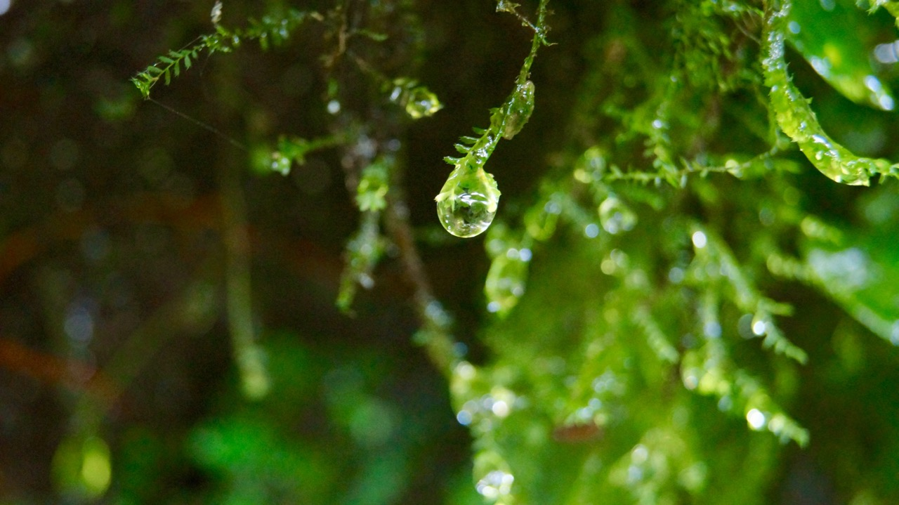 Costa-Rica-Regenwald - 21