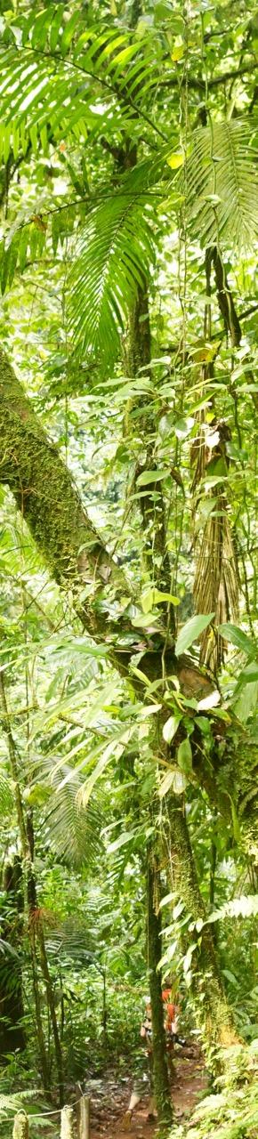 Costa-Rica-Regenwald - 23