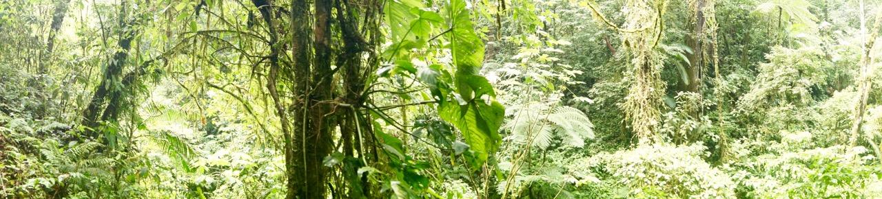 Costa-Rica-Regenwald - 24