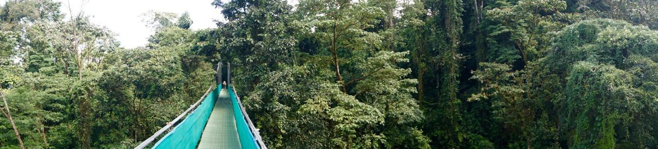 Costa-Rica-Regenwald - 5