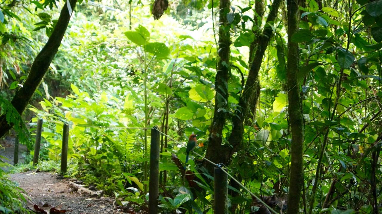 Costa-Rica-Regenwald - 6