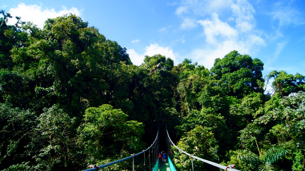 Costa-Rica-Regenwald - 7
