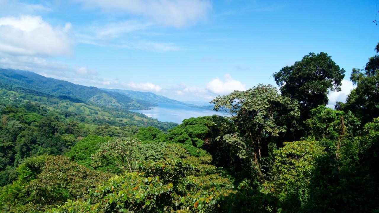 Costa-Rica-Regenwald - 9