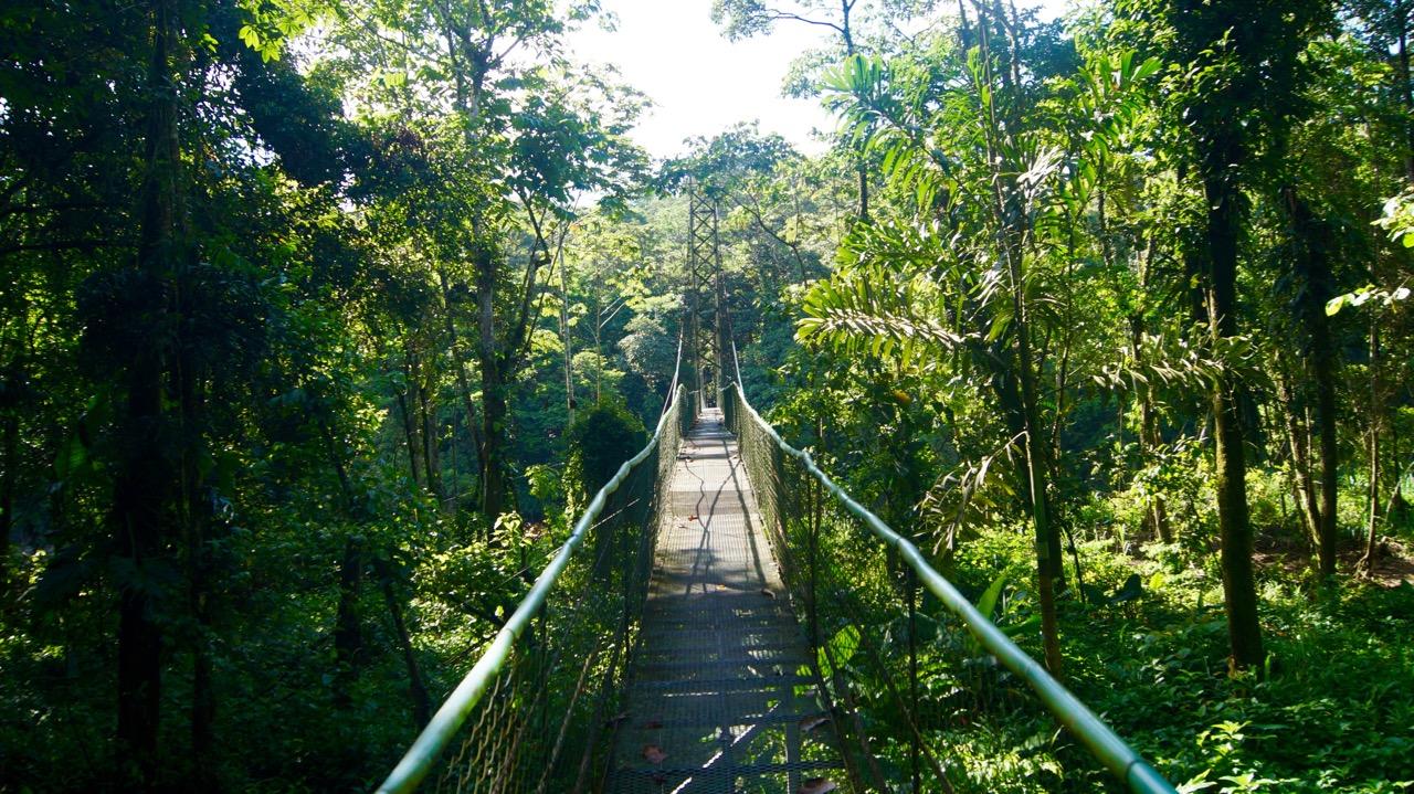 Hängebrücke Rio Sarapiqui Costa Rica