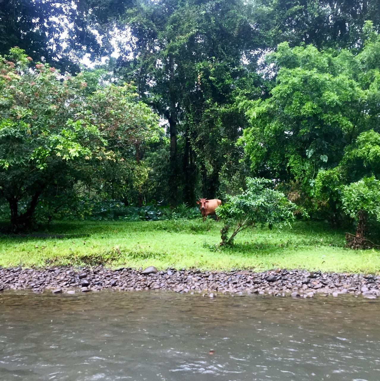 Kanu Rio Cuarto Kuh