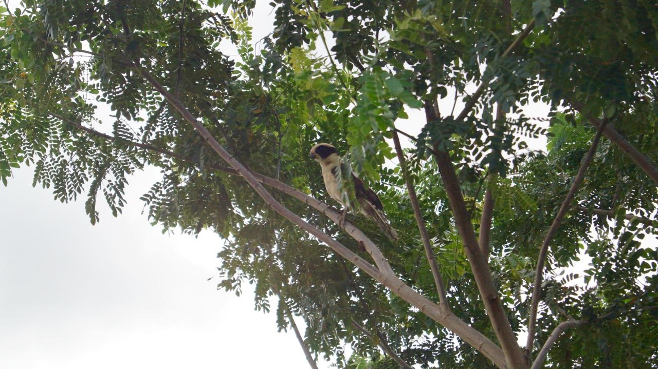 Palo-Verde-Nationalpark-Vogel - 11