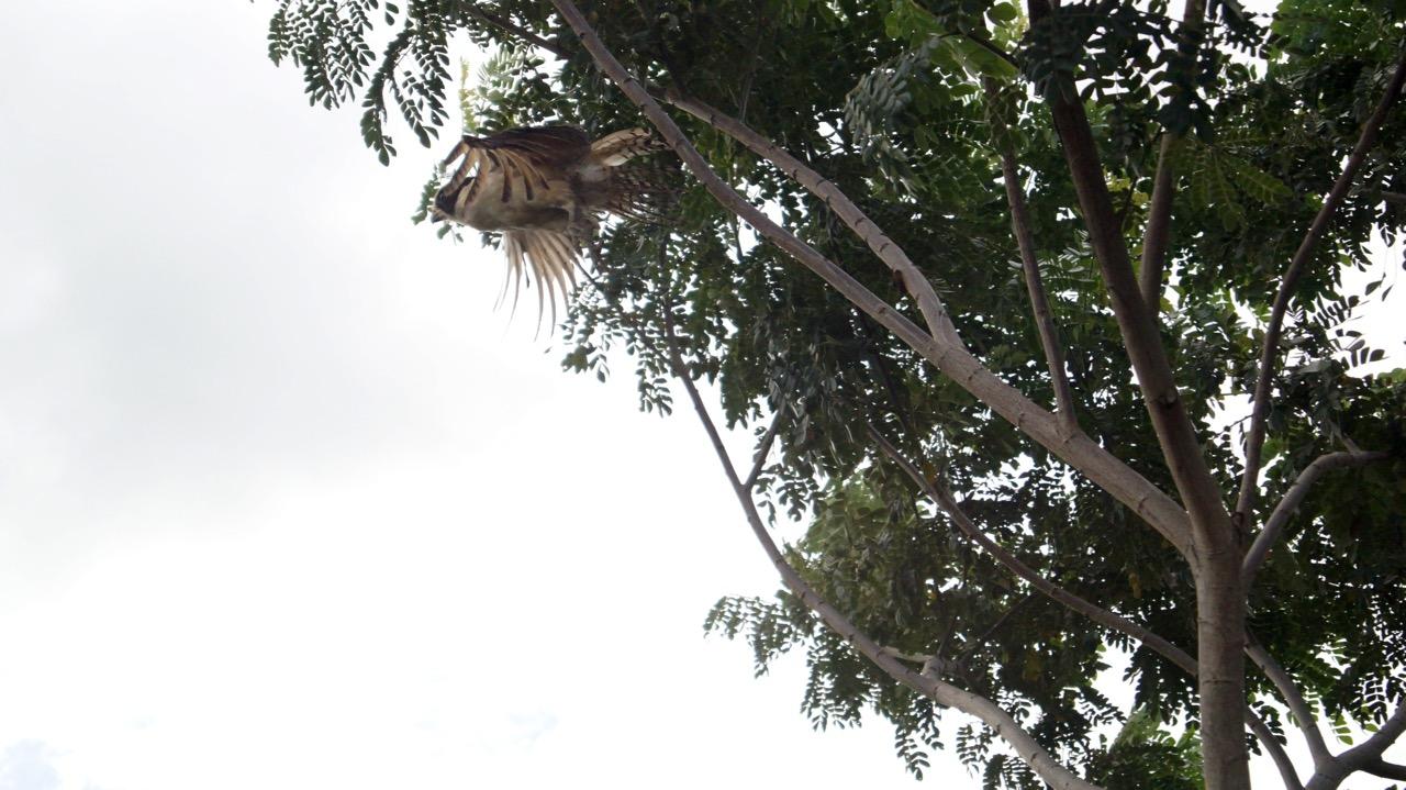 Palo-Verde-Nationalpark-Vogel - 12