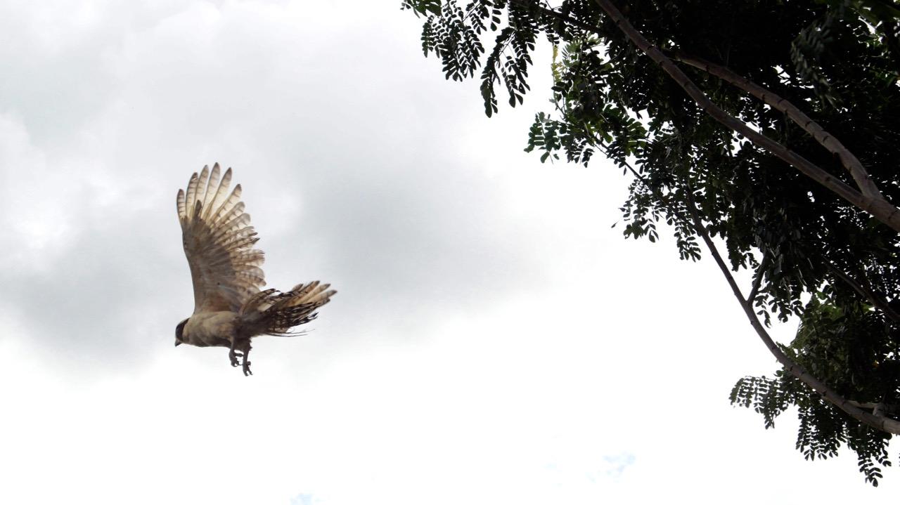 Palo-Verde-Nationalpark-Vogel - 13
