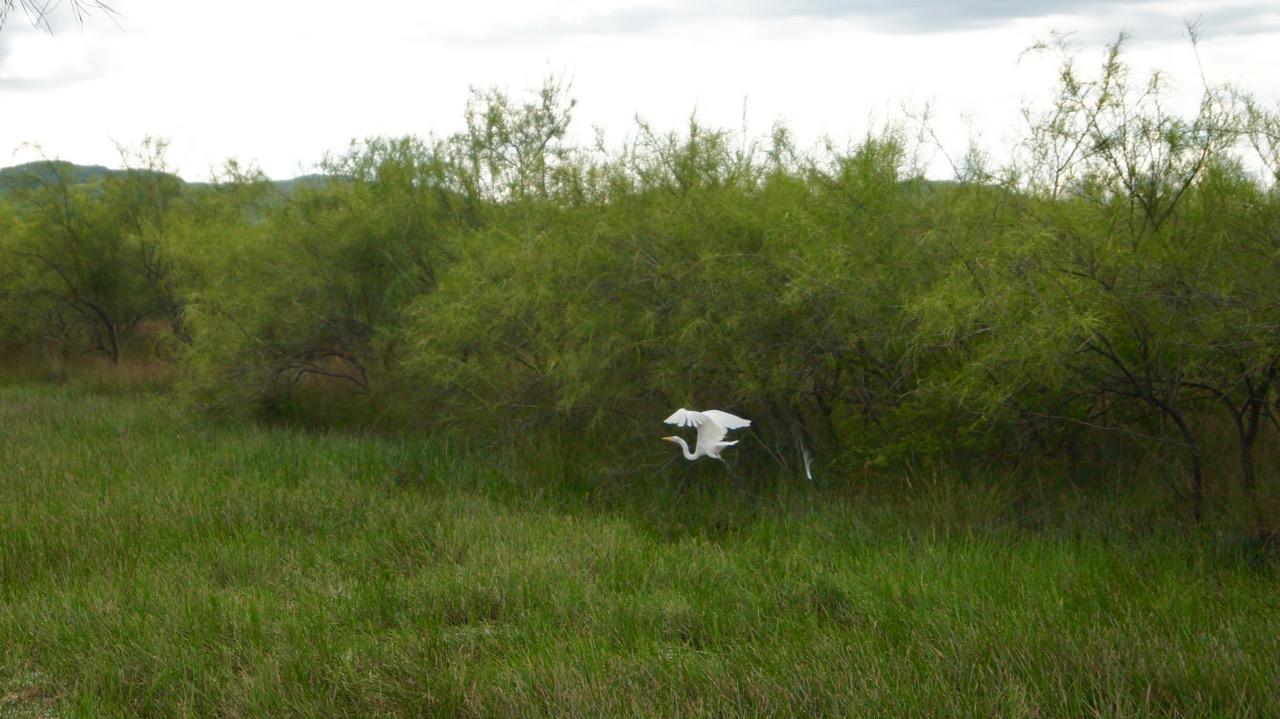Palo-Verde-Nationalpark-Vogel - 17
