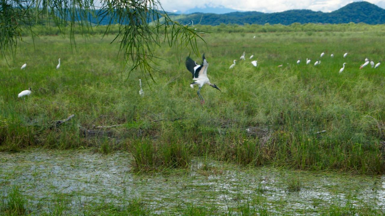 Palo-Verde-Nationalpark-Vogel - 19