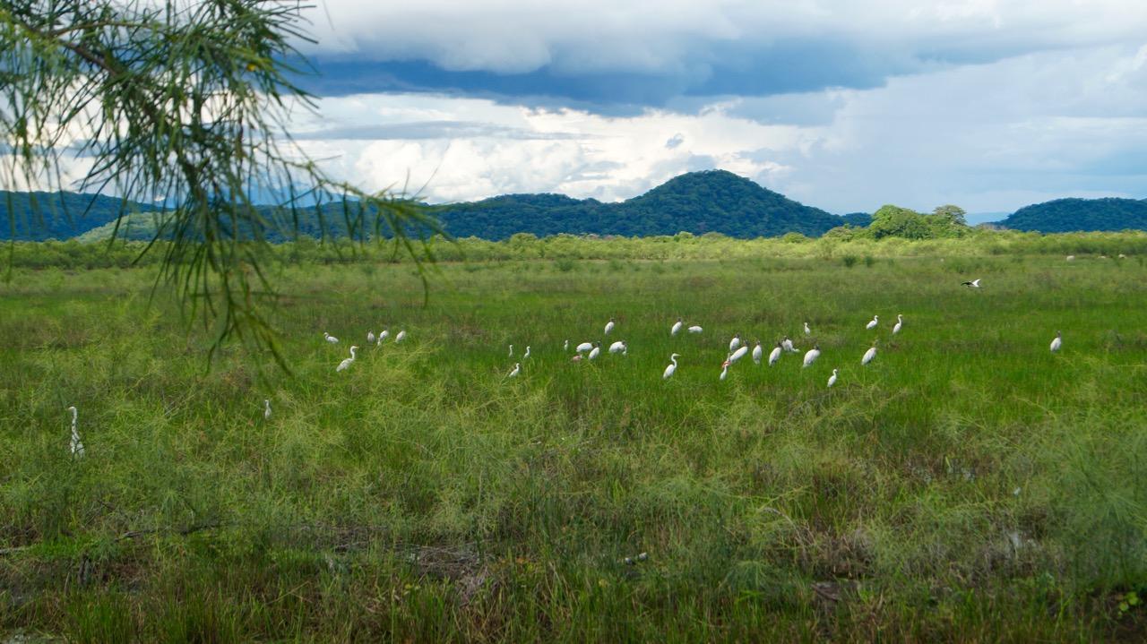 Palo-Verde-Nationalpark-Vogel - 20
