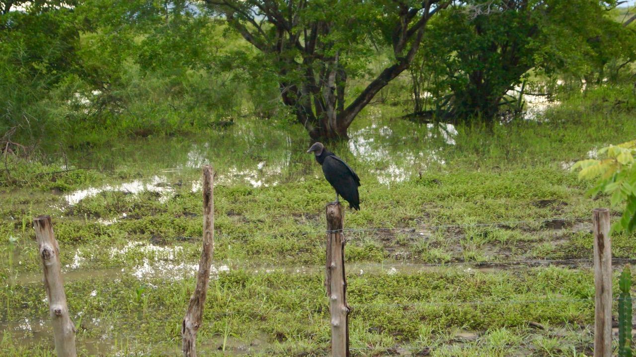 Palo-Verde-Nationalpark-Vogel - 32