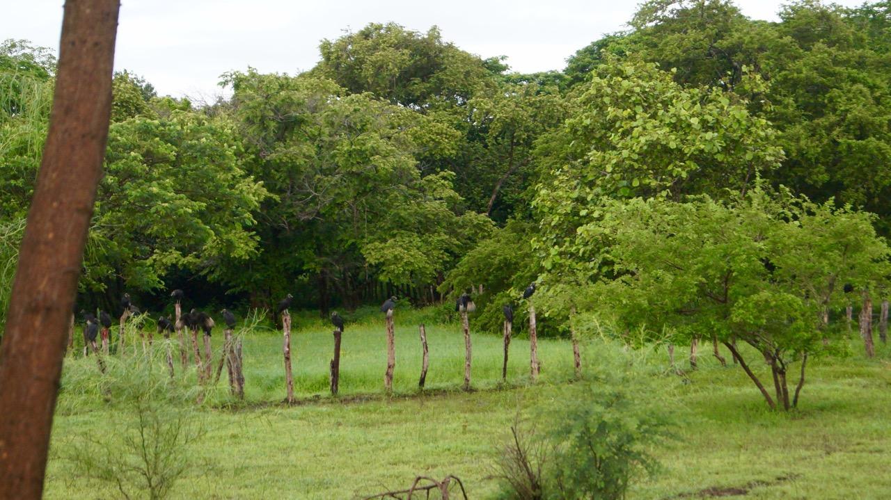 Palo-Verde-Nationalpark-Vogel - 33