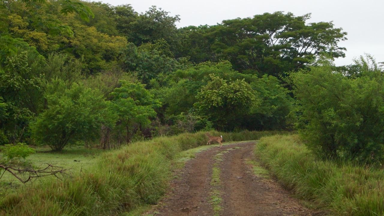 Palo-Verde-Nationalpark-Vogel - 34