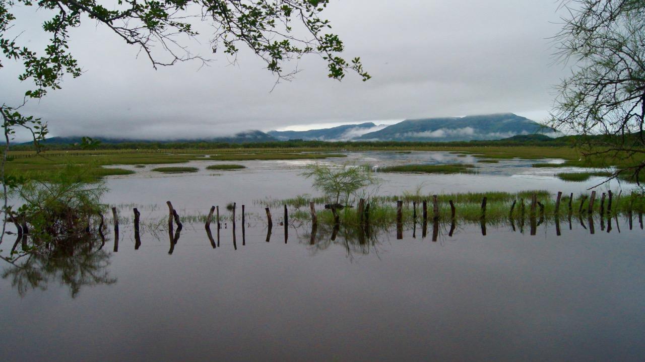 Palo-Verde-Nationalpark-Vogel - 35