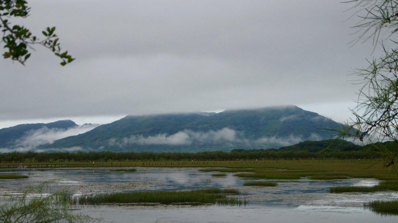 Palo-Verde-Nationalpark-Vogel - 36