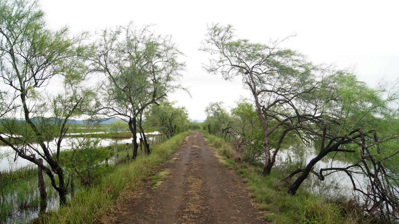 Palo-Verde-Nationalpark-Vogel - 38