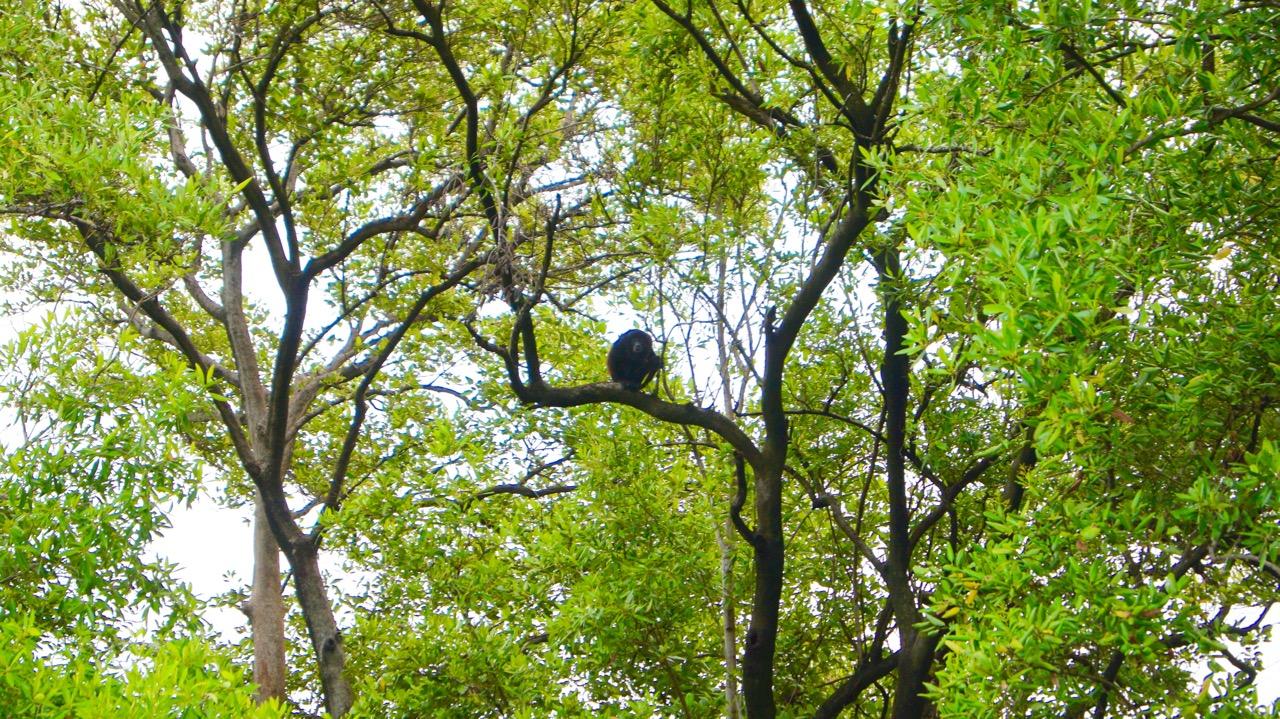 Palo-Verde-Nationalpark-Vogel - 40