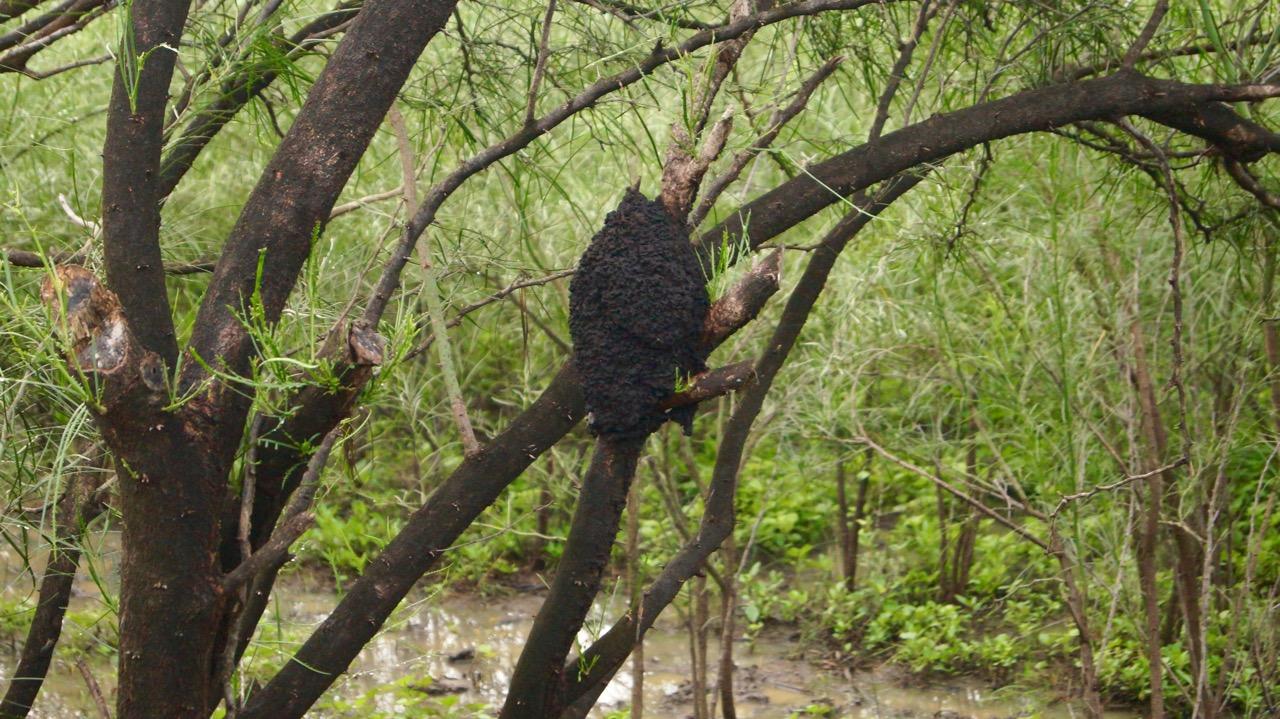 Palo-Verde-Nationalpark-Vogel - 41