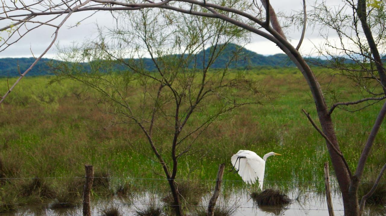 Palo-Verde-Nationalpark-Vogel - 42