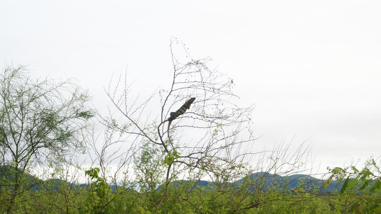 Palo-Verde-Nationalpark-Vogel - 43