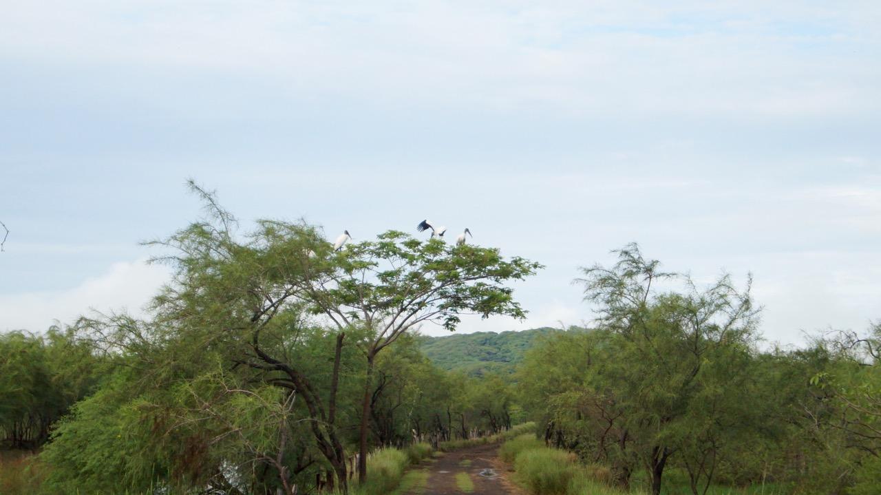 Palo-Verde-Nationalpark-Vogel - 44