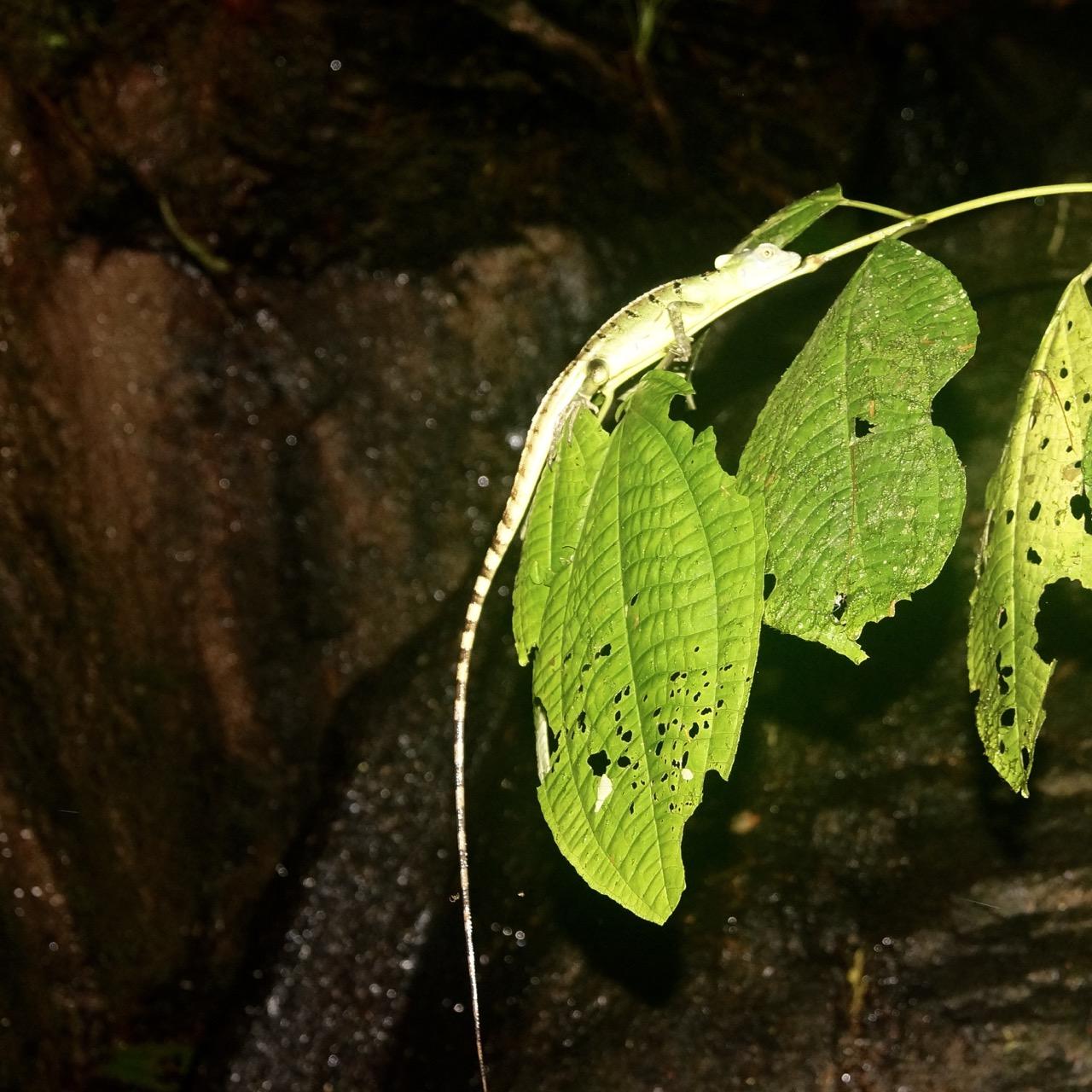 Reptilien Costa Rica