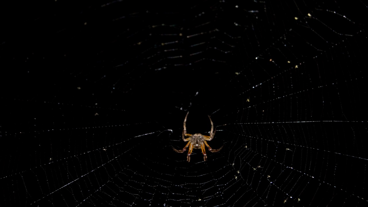 Spinnennetz Costa Rica