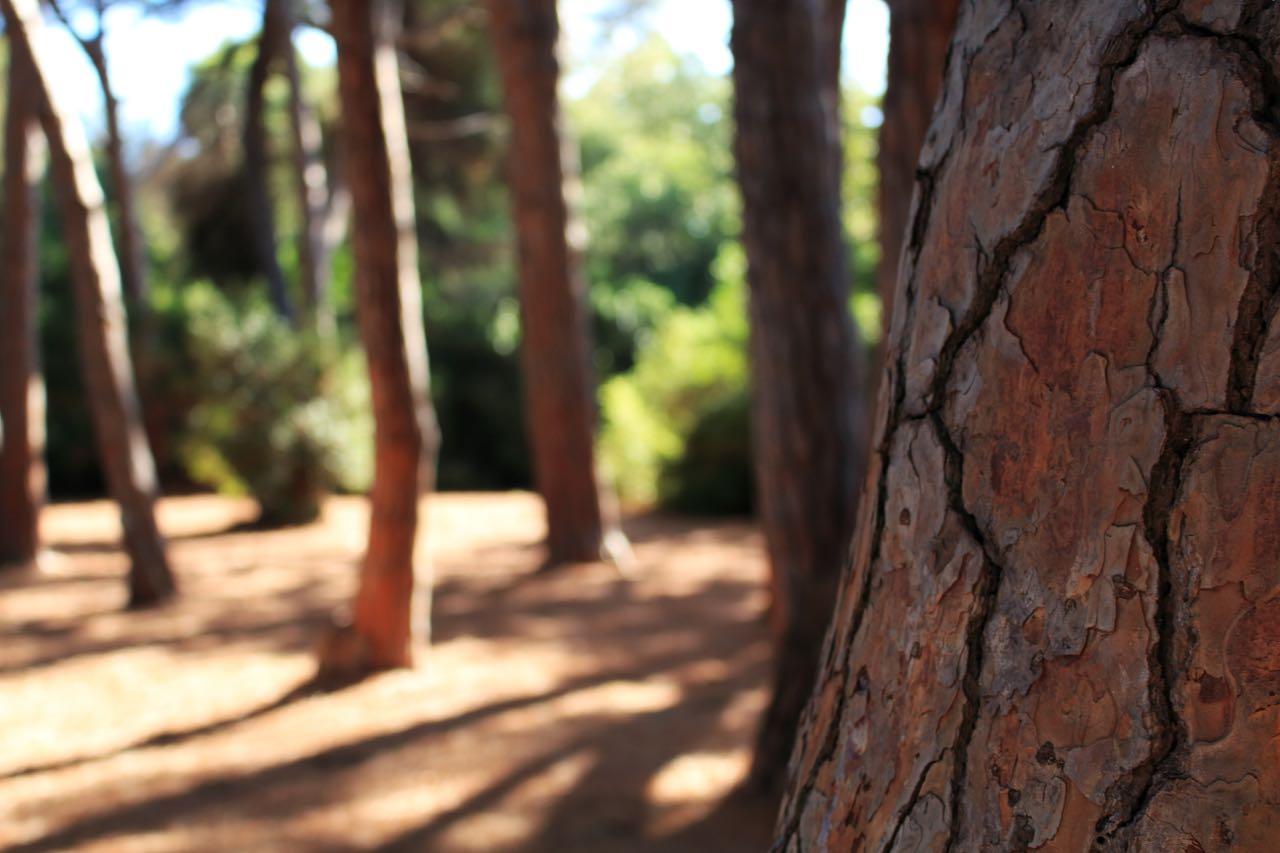 Sainte Marguerite Bäume
