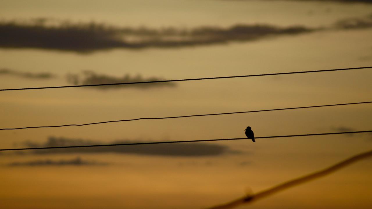 Vogel_Elektroleitung