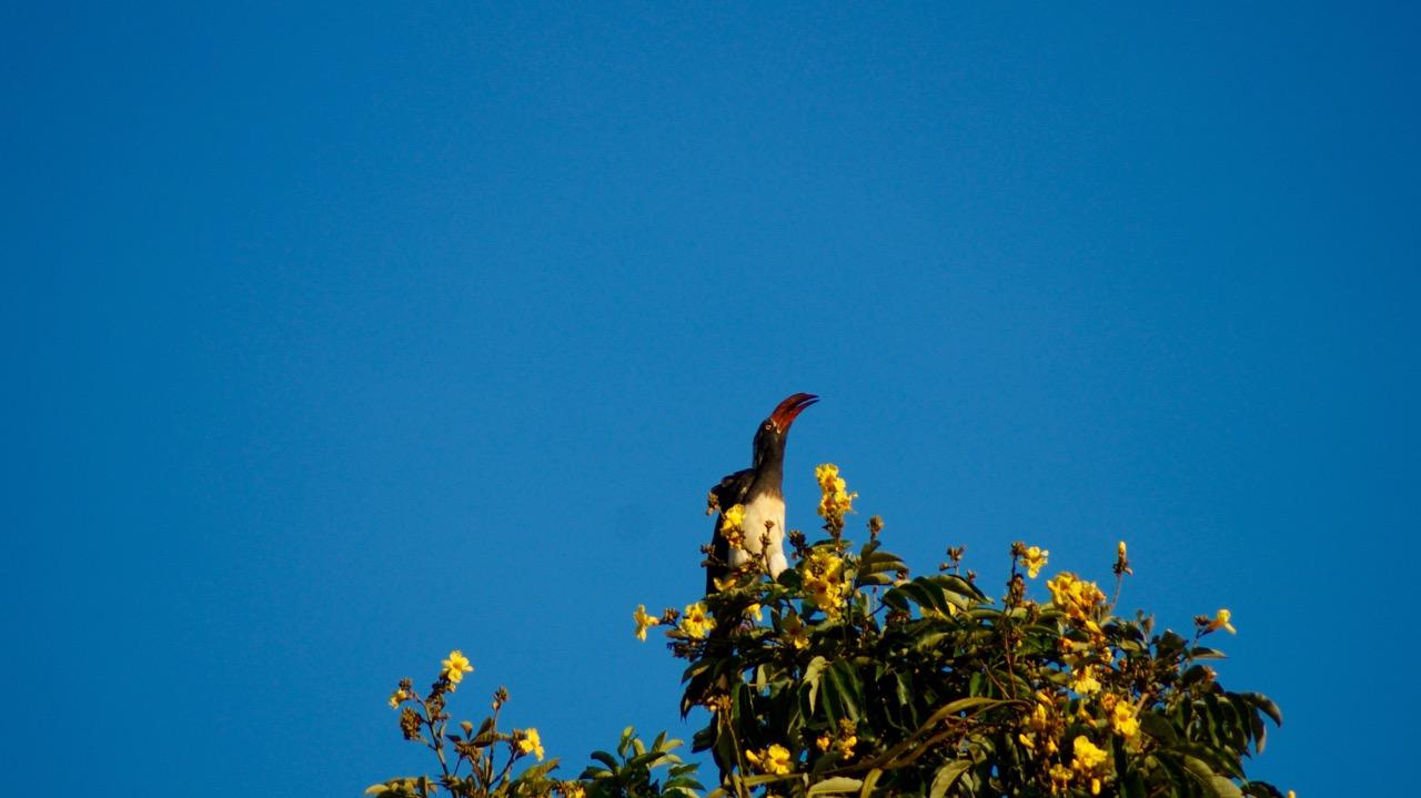 Vogel_Uganda