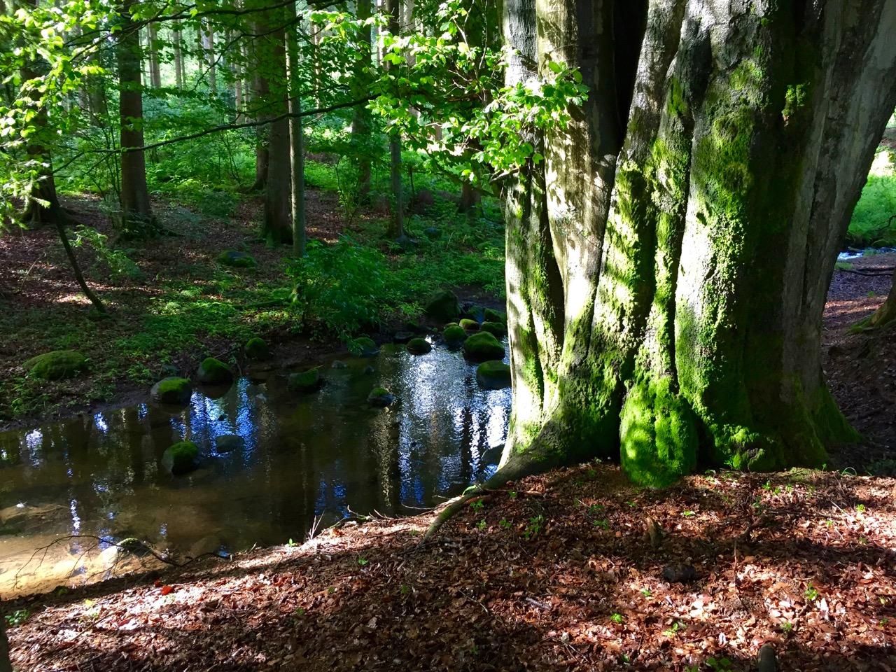 Bach-Westerwald