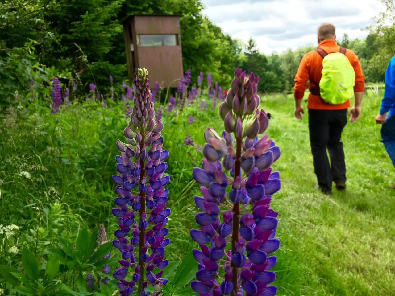 Flowerpower-Westerwald